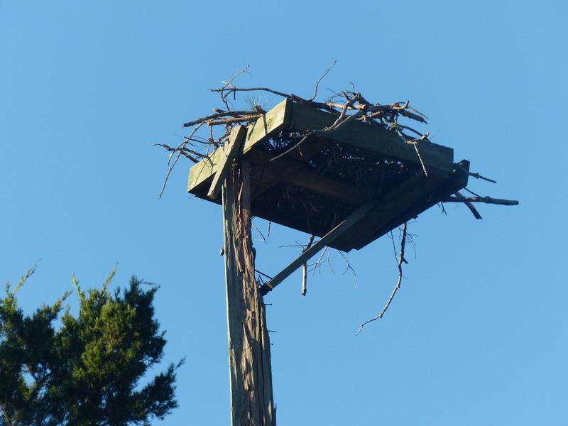 damaged eagle nest platform, Dewees Island, SC
